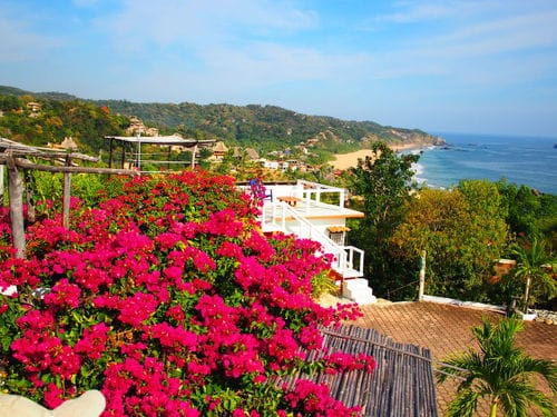 Pink flowers in nature with mesmerizing sea view