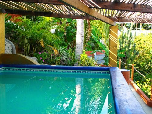 Swimming Pool in a Exotic Garden